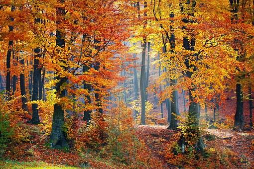 woods-1072819__340
